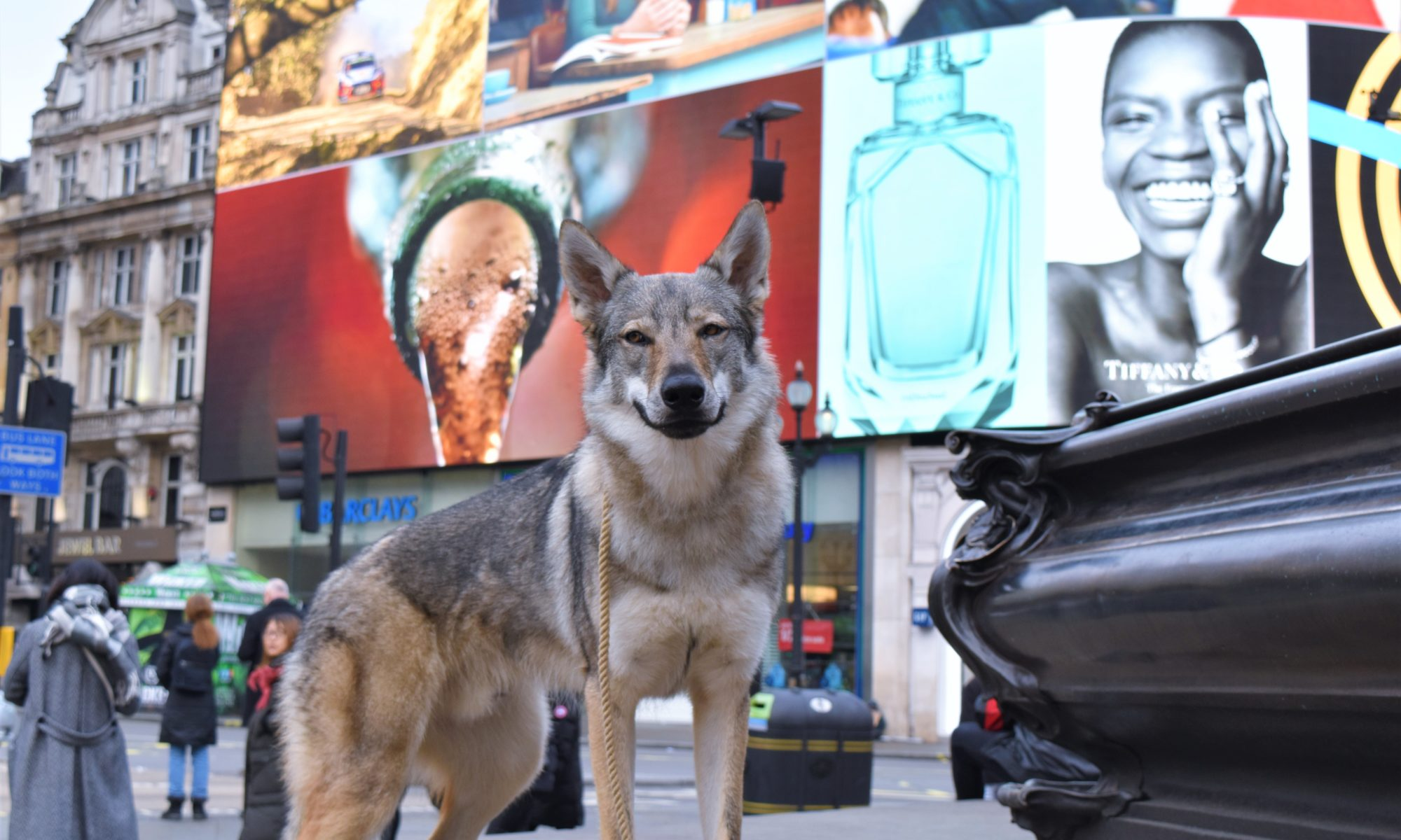 Wolfdog Of London